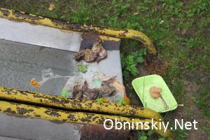 мусор во дворе дома по ул. Звездная д. 13