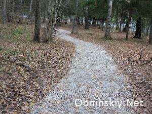 В Гурьяновском лесу проложили дорожки