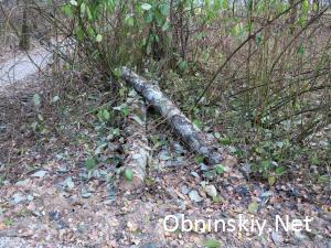 В Гурьяновском лесу, а это с другой стороны деревья, тоже не нужные.. благоустройство...