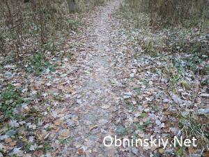 В Гурьяновском лесу. Это старая бетонная дорожка, её с трудом можно различить