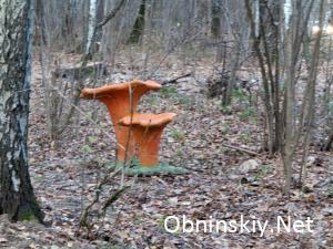 В Гурьяновском лесу фигурка грибов