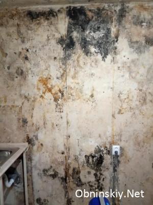 стена с грибком, после снятия обоев