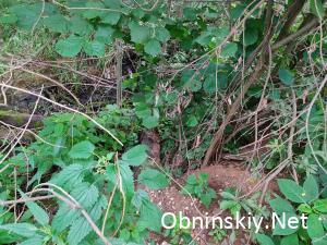 Среди травы в лесу можно найти только брошенные шпалы
