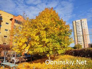 Осенние краски Обнинск